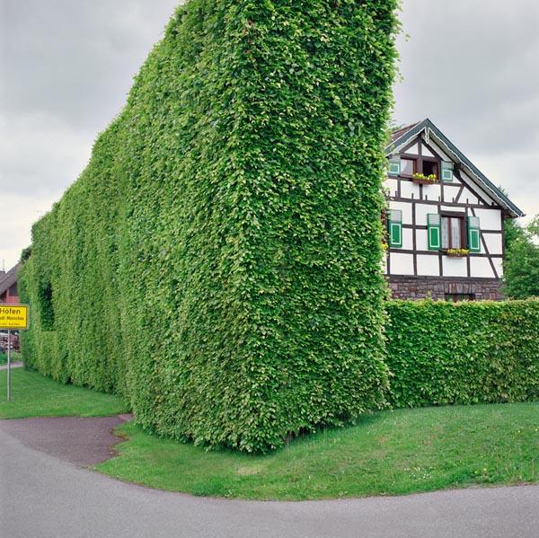 Heckenhausen